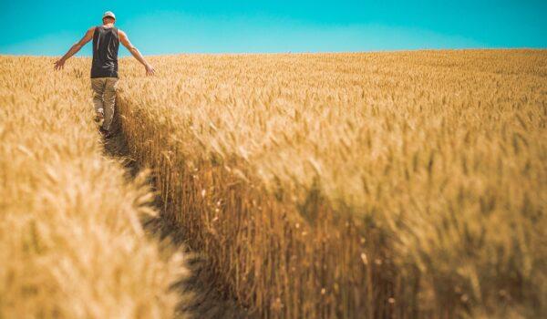 Regione Puglia, sbloccati finanziamenti per Programma di Sviluppo Rurale